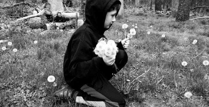 boy picking dandelions